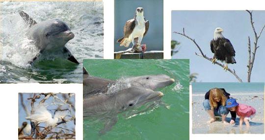 dolphin-ex-1
