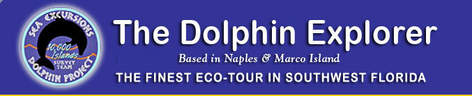 dolphin-explorer-header-675